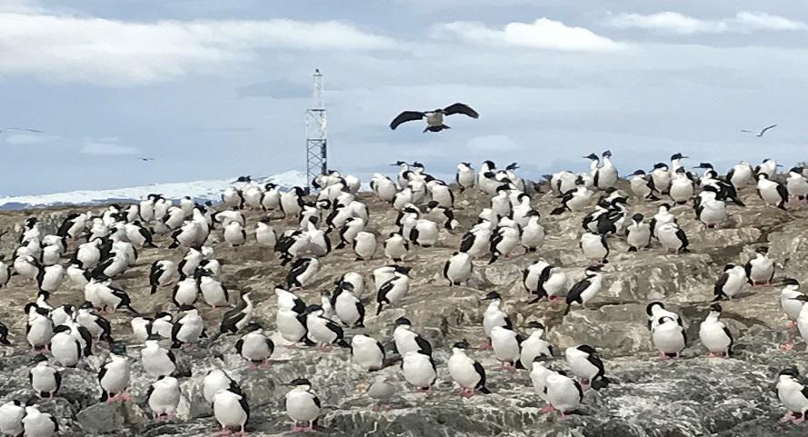 ushuaia-pinguinos