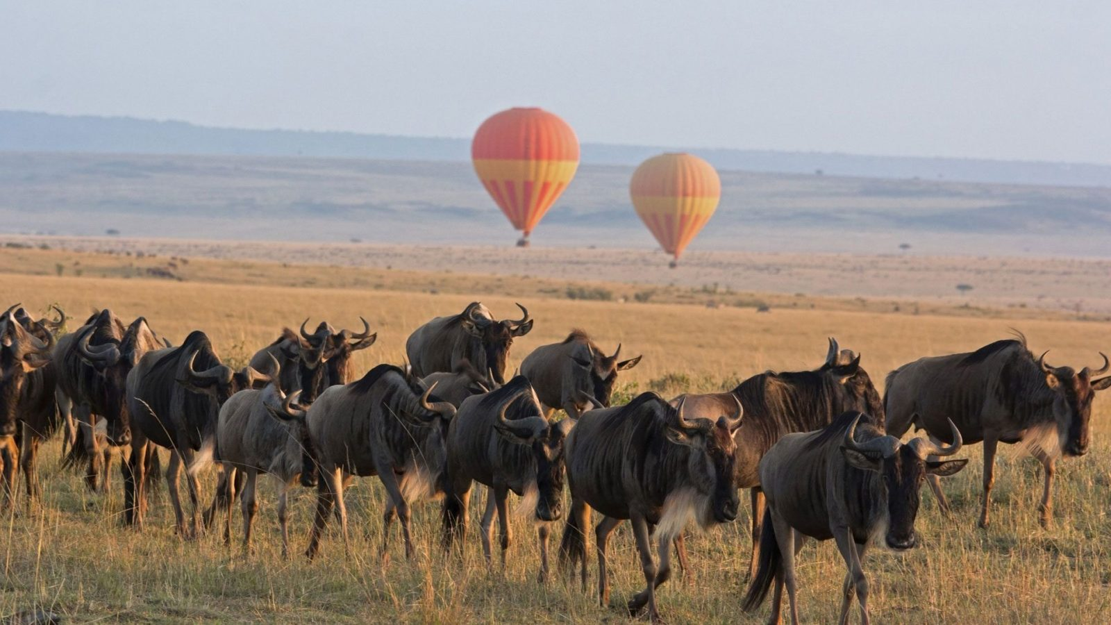 Serengeti-Balloon-Safari-andBeyond-Experience-1600x900